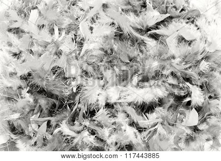 Background Texture Of Soft White Bird Feathers