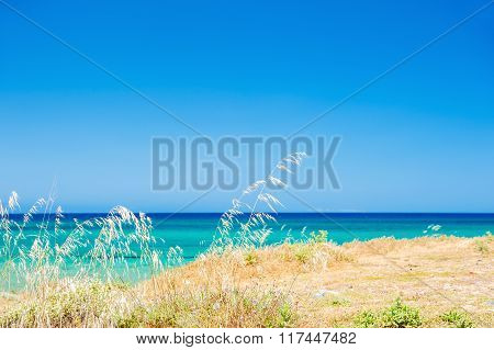 Wild Grasses On The Sea Coast With Sea And Sky Background