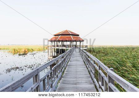 Wooden Bridge In Lotus Lake At Khao Sam Roi Yod National Park.