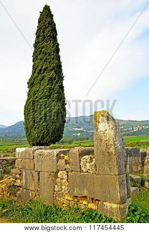 Volubilis In Morocco Cypress  Roman Deteriorated Monument