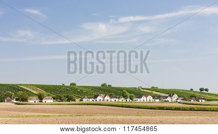wine cellars with vineyard, Diepolz, Lower Austria, Austria