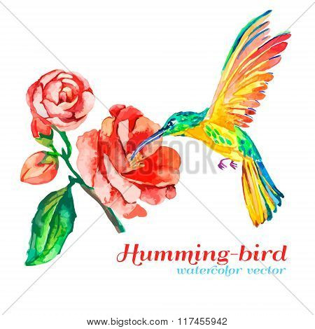 Hummingbirds and hibiscus. Tropical flower, bird. Isolated. Watercolor. Vector for your design.