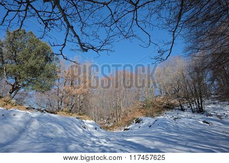 deciduous winter woods in Etna National Park, Sicily