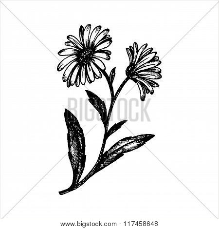 vector chamomile flowers