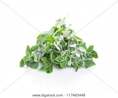 Fresh garden oregano herb. Isolated on white background