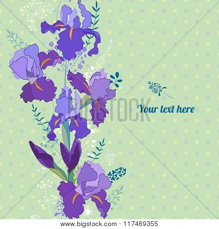 Floral spring template with cute bunches of irises. For romantic design, announcements, greeting cards, posters, advertisement.