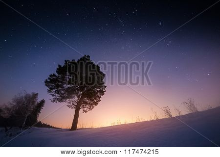 Trees in the snowy field and starry sky highlighted by rising moon