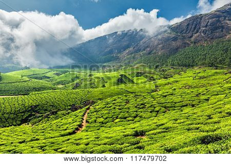 Scenic green tea plantations, Munnar, Kerala state, India