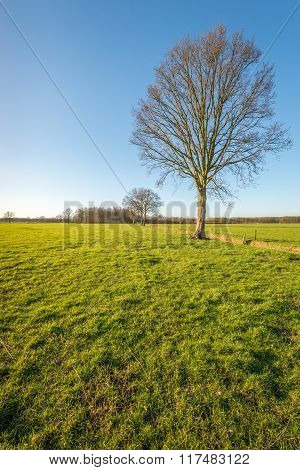 Tree With Bare Branches In A Rural Landscape
