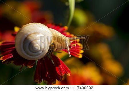 Little Snail In The Wild