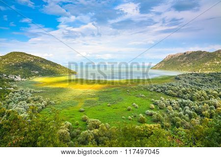 Picturesque Lake Shore, Overgrown With Bright Grass