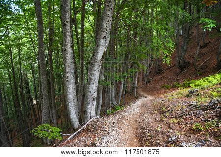 Path Down Through The Woods On A Mountain Slope