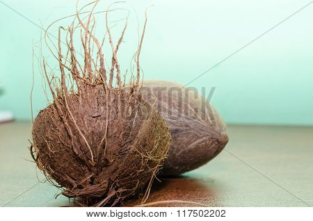 Coconut And His Shell