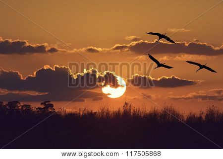 Sunset Over Trees with Sandhill Cranes