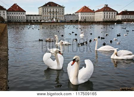 Swans On The Water Palace Of Nymphenburg.