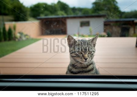 Cat Looks Into The House Through A Window