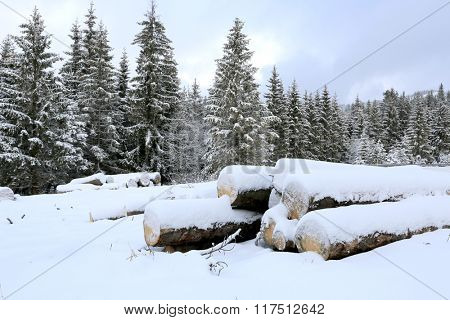 wooden logs under snow on winter meadow in forest