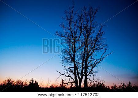 dead tree on dark blue sunset sky background