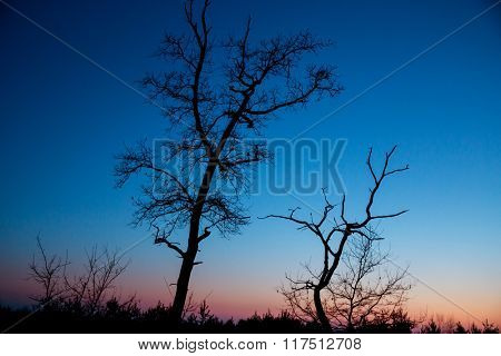 dead trees on sunset sky background