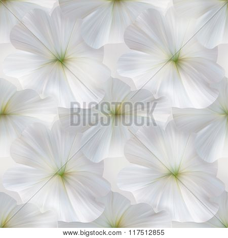 White Petunia Seamless Pattern For Fabric Or Textile Design.