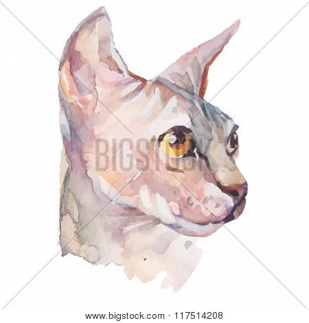 Hand drawn portrait Elegant Sphynx cat. Vector isolated elements. Fashion. Watercolor.
