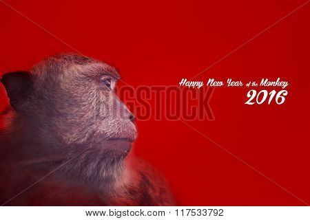 Chinese New Year Design With Monkey Portrait