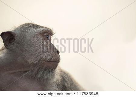 Wild Monkey Portrait On Sky Background