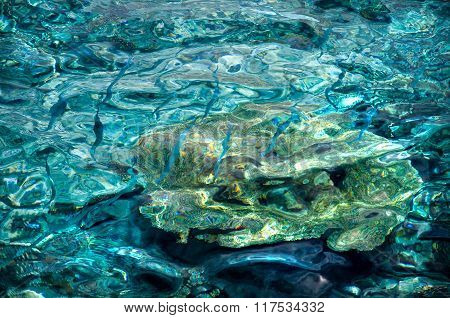 Crystal Clear Turquoise Water With Small Blue Fishes