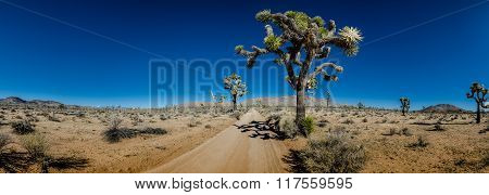 Panorama Of Sandy Desert Road With Joshua Trees