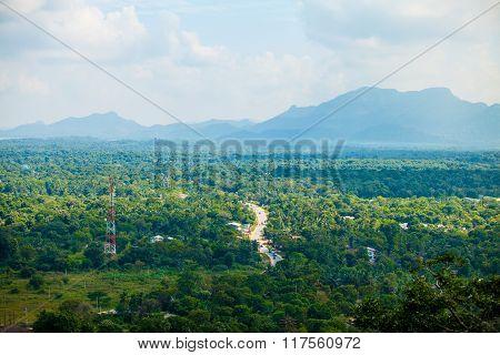 Sri Lanka Tropical Forest