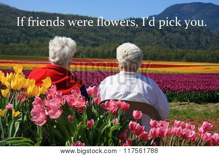 Two senior ladies seated outside, enjoying the view of the tulip fields. Also available without quotes.