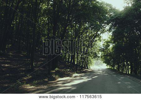 Asphalt Road Through The Summer Beautiful Green Forest;