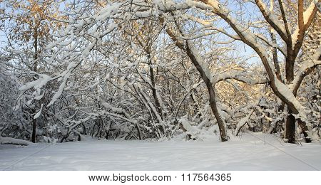 Branches of trees covered with snow.