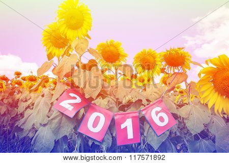 Happy New Year 2016 On Sunflower Field, Welcome 2016 Colorful