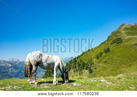 Close View On The Horse