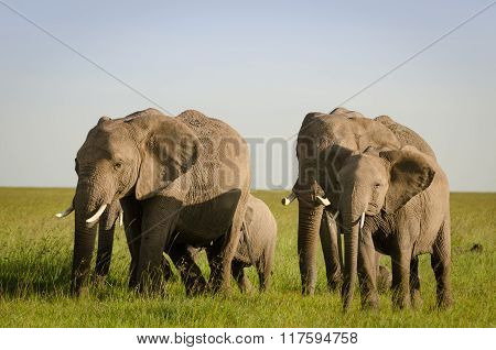 Baby elephant with mother in Masai Mara National Reserve, Kenya.