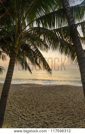Coconut trees on the tropical beach at sunset