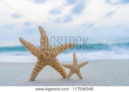 Starfish on the beach in Thailand
