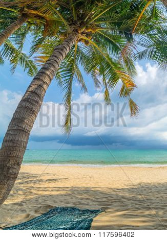 Coconut trees on the beach in Lamai Koh Samui island Thailand