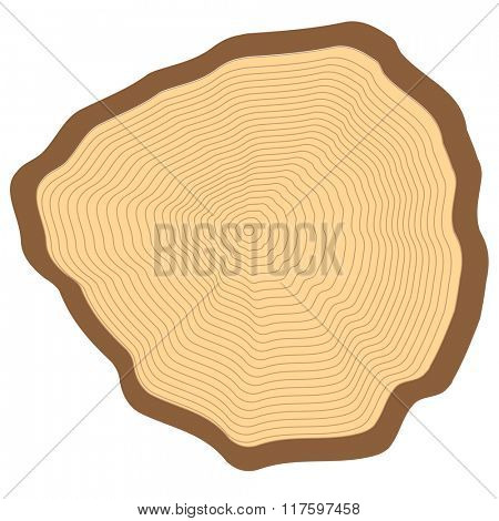 Cut of a tree, visible annual rings.