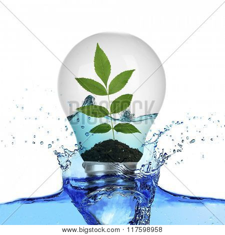Tree leaves growing inside light bulb with water and in water splash isolated on white