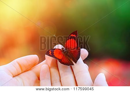 Beautiful colorful butterfly sitting on female hand, close-ups