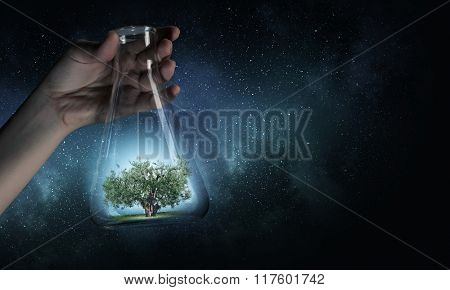 Tree in glass flask