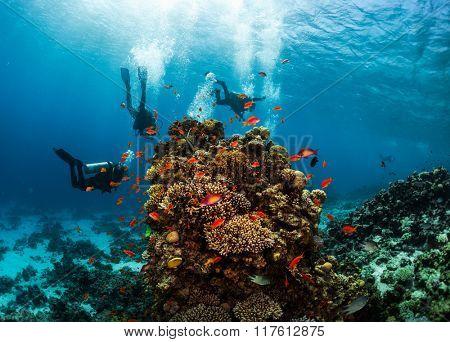 Group of divers hanging around vivid coral reef formation. Red Sea, Egypt