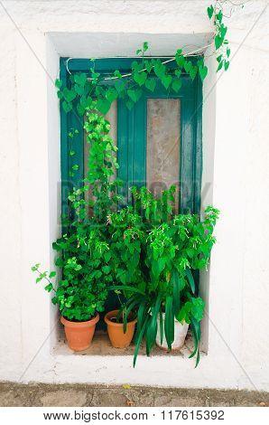 Door and plants