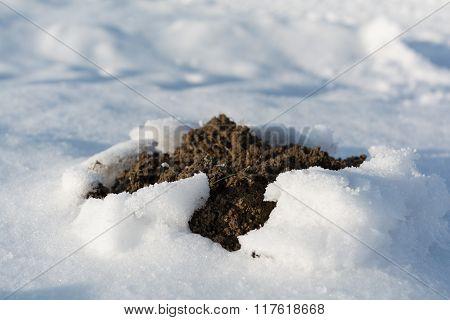 Molehill Breaks Through Snow
