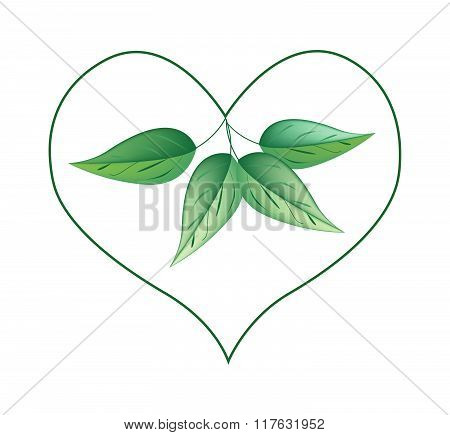 Fresh Green Leaves In A Heart Shape Frame