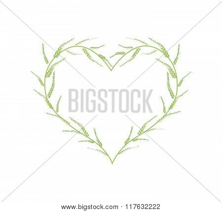 Fresh Green Ferns In A Beautiful Heart