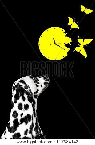 Dalmatian Looks At The Clock With Butterflies