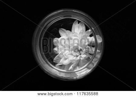 White Chrysanthemum In A Vase